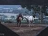 Al Dunlop Horses 2