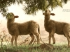 1D6A0479 lambs