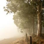 First mist March 2012